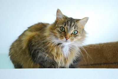 Kitty Witty Provia