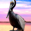 Pelican, fort walton beach, florida