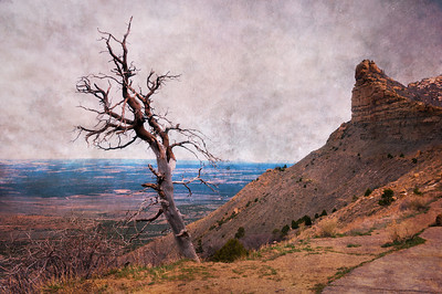 A dead tree at a turnout at Mesa Verde, Colorado