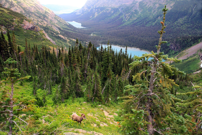 """We started this hike well beyond the second lake in the valley far below. We still had a ways to go to make it to the glacier but stopped frequently to take photos like this one.  <a href=""""http://www.bigskyfishing.com/National_parks/glacier/grinnell_glacier_trail.shtm"""">http://www.bigskyfishing.com/National_parks/glacier/grinnell_glacier_trail.shtm</a>"""
