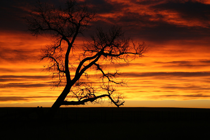 The sun was rising in Kansas after an all night drive toward Colorado.  I noticed this tree and colors and stopped to snap this photograph of the tree and farm house far in the distance.