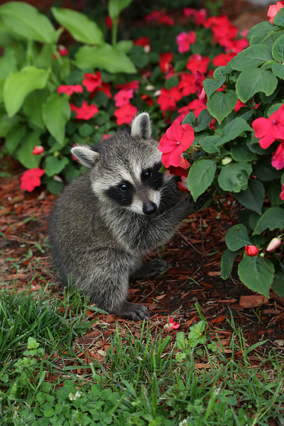 caught eating flowers