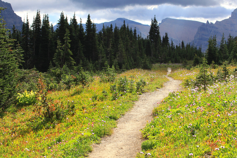 "This is an unmarked trail near Logan Pass in Glacier National Park.  This was one of our favorite hikes because the wildflowers dominated both sides of the trail and the grade was easy...at least for a while.  We eventually scaled a mountain but looked forward to making our way back to this beautiful place.  <a href=""http://www.glaciernationalpark.name/logan_pass/"">http://www.glaciernationalpark.name/logan_pass/</a>"