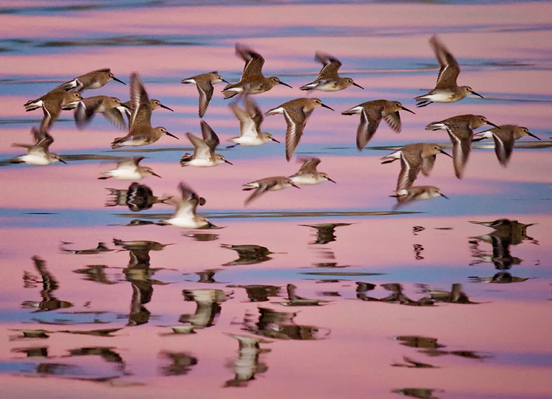 Honorable Mention  (Color Nature-Birds) 2014 International Exhibition of Photography