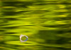 Accepted juried image (Color Nature-Waterscapes) 2012 International Exhibition of Photography