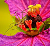 Honorable Mention (Color Nature-Insects) 2013 International Exhibition of Photography