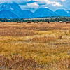 Horses-and-Tetons