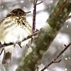 Birds, Under 18 © Davey Walters