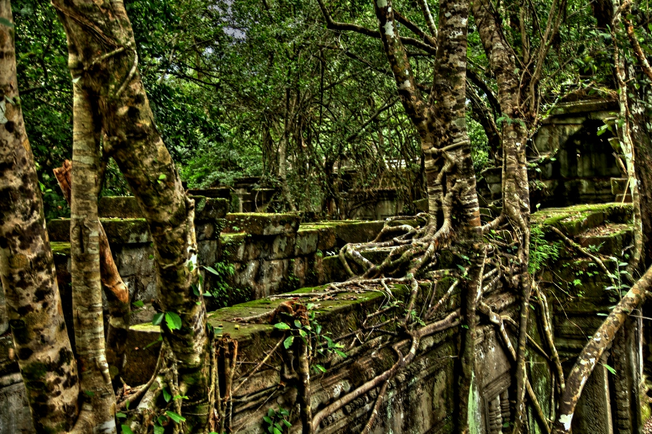 Overgrown walls at Beng Mealea.