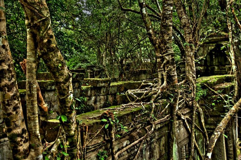 Overgrown walls at Beng Mealea.