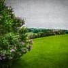 5/24/17<br /> <br /> Lilacs at Shelburne Farms.