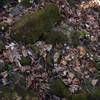 4/21/14<br /> <br /> Hepatica everywhere!