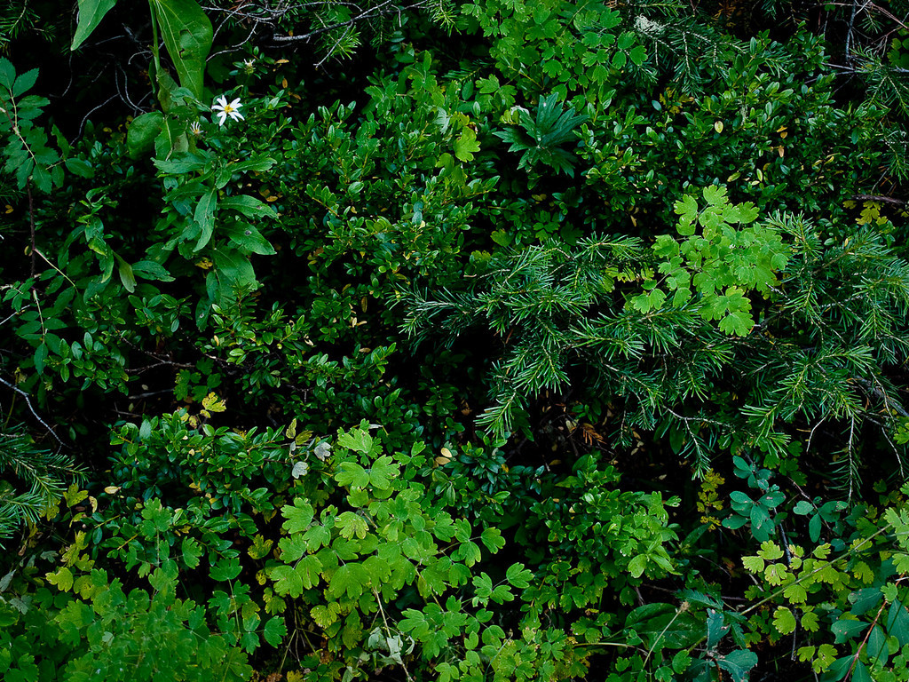 August 20th, 2009 | Old Coal Creek | Late Summer Greens