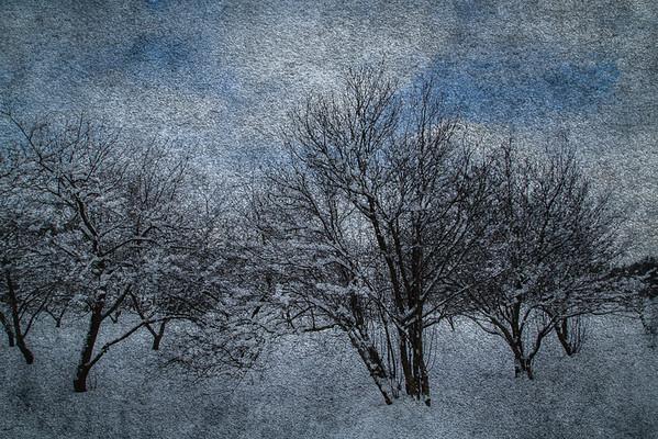 2/16/17<br /> <br /> Apple orchard.