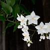 June 15: Flowers in a friend's yard.