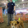 Mar 19. Agility trial. Dustin and Paula just finished their victory lap after earning their championship and I wanted a slightly different perspective. This was a very quick snapshot as I dashed in front of them as they came out of the ring. I like it, but wish Paula's face was more in focus.
