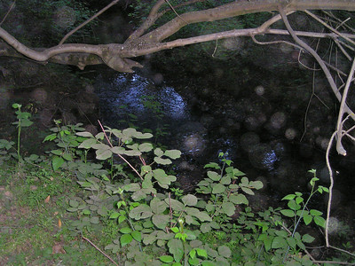May 11: Creek in Rancho San Antonio, with flash, making interesting round reflections throughout the picture