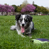 Apr 2: Boost in the park.  Postprocessing: Fixed exposure, applied unsharp mask, selected eyes & used levels to lighten.