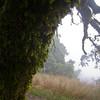 July 13: Mossy tree in Russian Ridge Open Space Preserve