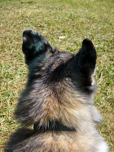 July 19: Tika's ears are now green.