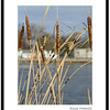 City Park Cattails, Fort Collins. First shots with the KM Maxxum 7D.