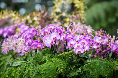 03.10 Orchid Exhibit