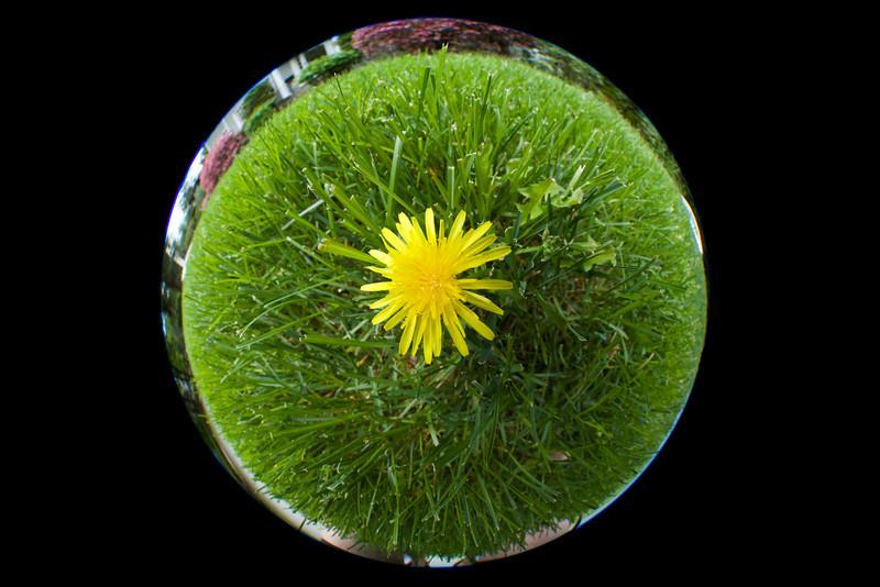 Nearly Perfect Lawn=Waban