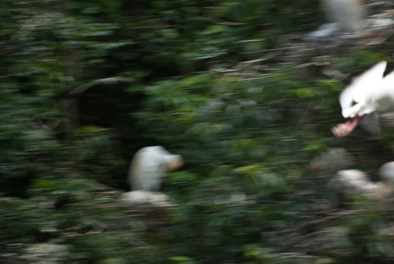 Panning to Show the Action - near misses<br><br>You have to be faster than the bird.