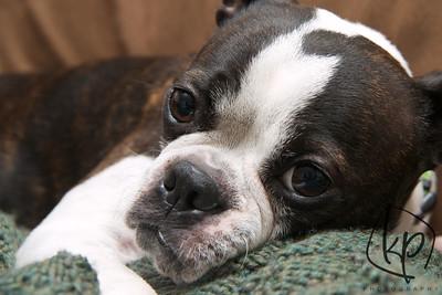 January 17, 2013 Snuggle Pup