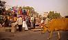 April 26, 2006 - Delhi Monday market scene - Bovine apparel fantasy.