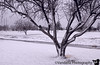 December 29, 2006 - nothing much other than snow..all day..<br /> No wonder I need some colorful macro breaks !