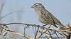 Feb 12, 2006 - some kinda sparrow I think.. pretty little bird..reasonably sharp i think