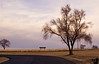 Feb 20, 2006 - a tree, a road, a turn..<br /> I'm not sure if the other tree in the corner adds to the shot or detracts, well..