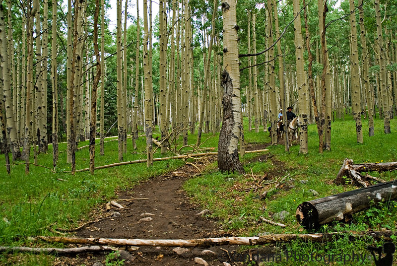 July 1, 2006 - Hiking in Pecos Wilderness near Santa Fe. Hike thru aspen groves, meadows filled with wildflowers,hawks,  hummingbirds and horses.