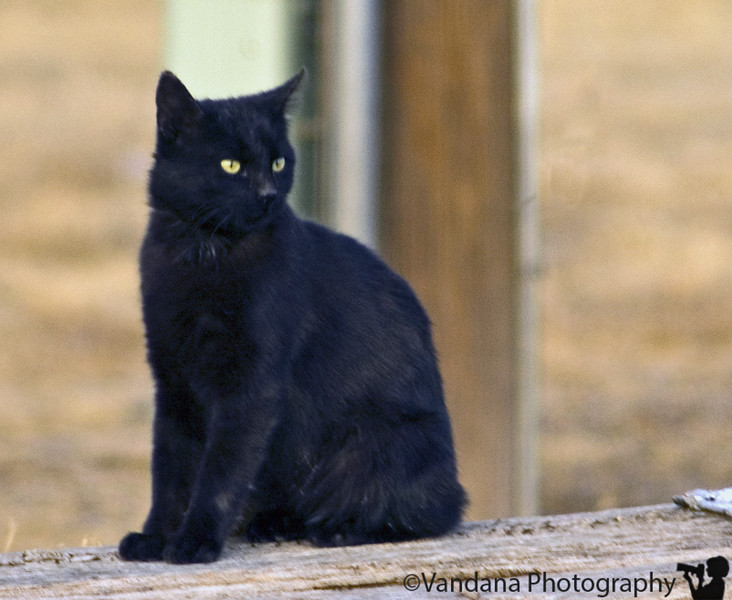 March 6, 2006 - I havent done much/any pet photography, but this was a wild cat around in a local park - it's quite difficult to expose this black cat.. hope to improve..