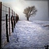"March 22, 2006 - snowed out Holga; <a href=""http://vandana.smugmug.com/gallery/1242623/1/60187137/Large"">pre-snow</a>"