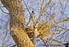 March 2, 2006 - a bird at its nest up in a very tall tree. the chirping made me look up.sometimes it is nice to take not so good bird pics in their own surroundings..I really like the nest and its little V shaped nook. and I thought it might fit the 'rough'challenge as well.