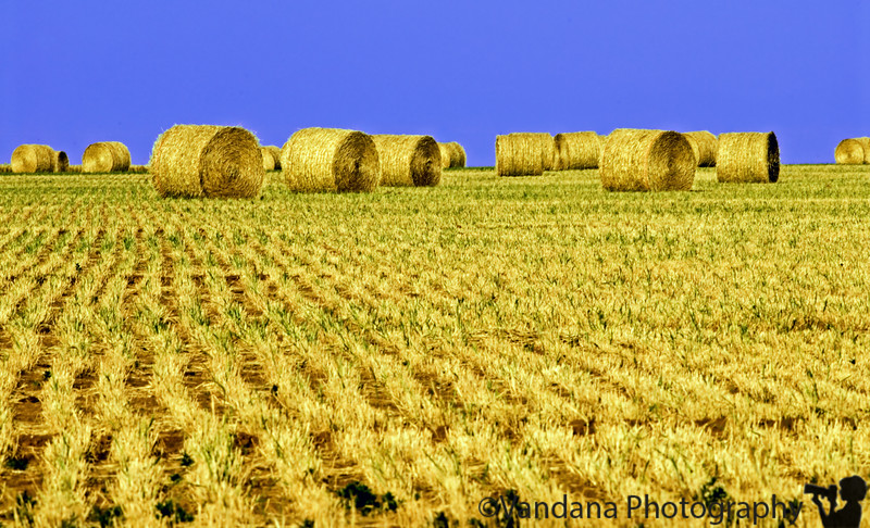 May 31, 2006 - bales of hay