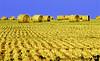 May 31, 2006 - bales of hay