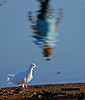 May 18, 2006 - reflections. don't know what the bird is, btw .