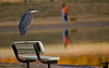 November 8, 2006 - 'Mr.GBH on duty'<br /> <br /> NM local parks are grossly underfunded; thankfully retired Mr.GBH has taken up the lifeguard job.