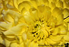 October 18, 2006- flower macro