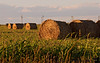 October 17, 2006 - haybales ..