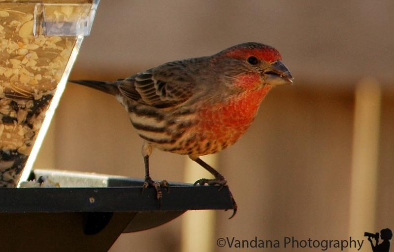 """Jan 22, 2006- Birds come closer! Many more birds in <a href=""""http://vandana.smugmug.com/gallery/1147110""""> gallery</a>"""