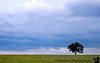 """September 7, 2006 - 'the lone tree in an upcoming storm'   It's sortof a repeat shot, but I'm rather fond of my(?!)lone tree, I often have an intense urge to photograph it over and over again whenever I pass by. Back in May, it looked like <a href=""""http://vandana.smugmug.com/gallery/1422992/2/70156824/Large"""">this</a> It's still lonely :) but has greener grass after all the rains.the full moon never came with all these clouds.."""