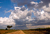 "September 14, 2006 - another cloudy day, another lone road, another almost lone tree. also a <a href=""http://vandana.smugmug.com/photos/95400284-L.jpg"">lone fisherman</a> at the local park."