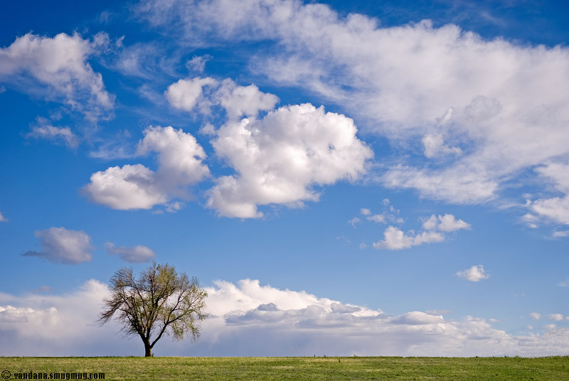 "April 24, 2007 - My lone tree  One of the most photographed subjects in my dailies - in <a href=""http://vandana.smugmug.com/gallery/1422992/2/70156824/Large"">May<a/>, <a href=""http://www.vandanaphotography.com/gallery/1842258/3/93769732/Large"">September <a/>, and <a href=""http://vandana.smugmug.com/gallery/1955509/1/107024067/Large"">October</a> 2006"