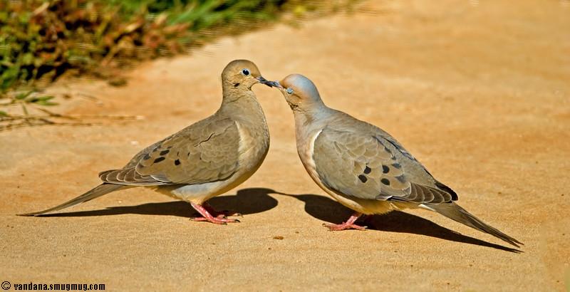 April 18, 2007 - Love birds