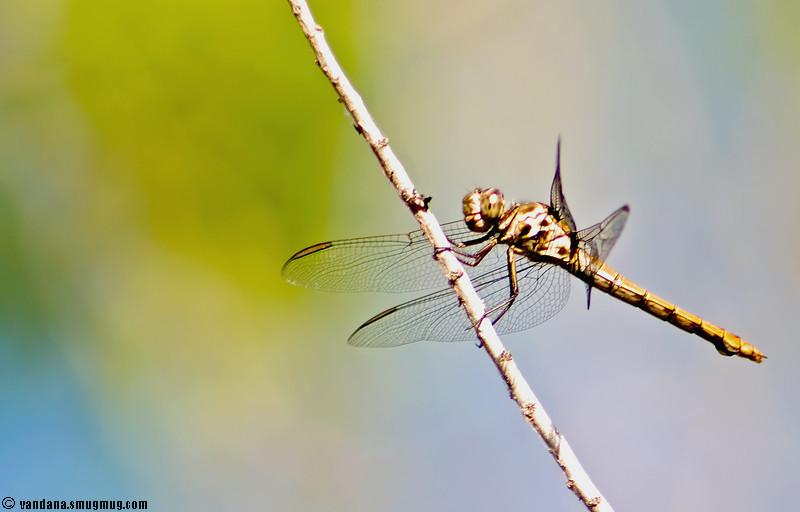 April 28, 2007 - Dragonfly pose