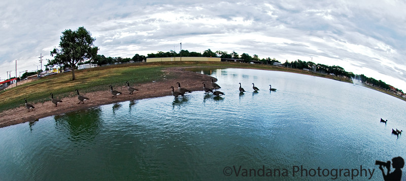 August 29, 2007 - Canada geese on the lake